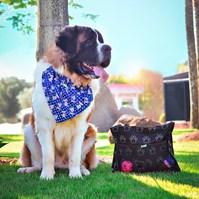 Produto Bandana Pet Style para cães e gatos para uso na coleira