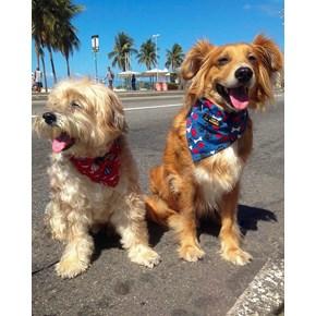 Bandana Pet Style para cães e gatos para uso na coleira