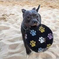 Produto Brinquedo Frisbee (disco) para cães