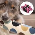 Brinquedo Ossinho em tecido para cães