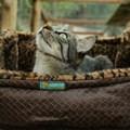 Cama Cat Confort Alice para gatos super macia e confortável