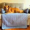 Cama pet Aconchego para sofá para cães e gatos