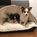 Cama pet Envelope Fluffy em pelúcia para cães