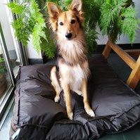Produto Cama pet impermeável Absolute para cães de todos os tamanhos