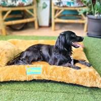 Produto Cama pet Soft Confort para cachorros de todos os tamanhos