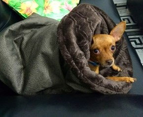 Cama pet Toca Love para cães e gatos de todos os tamanhos