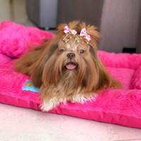 Produto Cama pet Top Summer para cães de todos os tamanhos
