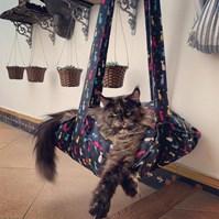 Produto Cama Trapeze suspensa para gatos com almofada para ele dormir