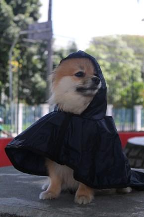 Capa de chuva Pet Style para proteger seu cachorro da chuva