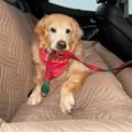 Capa pet impermeável para carro Aconchego Car