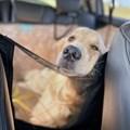 Capa pet impermeável PLUS PREMIUM + TELA para levar cães no carro