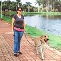 Cartucheira de cintura Walk para adestramento e passeio com cães