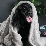 Produto Cobertor edredom Pet Quentinho dupla face para cães