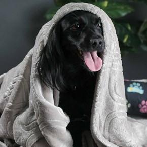 Cobertor edredom Pet Quentinho dupla face para cães