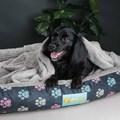 Cobertor edredom Pet Quentinho para cães
