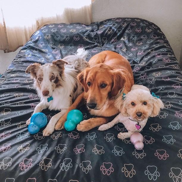 Cobre Leito Elegance Impermeável para cães e gatos na cama