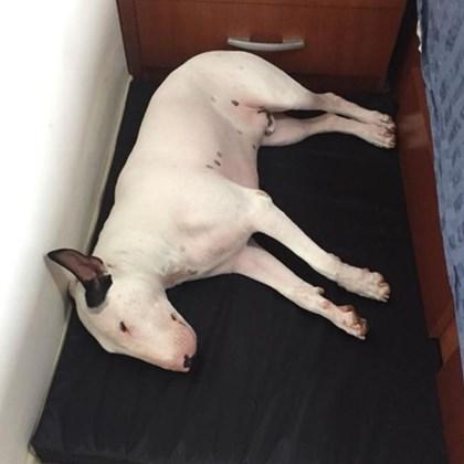 Colchonete cama impermeável Pet Clean para cães (fácil limpeza)