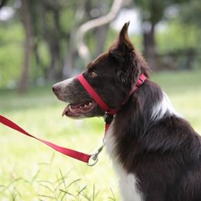 Coleira cabresto Correction antipuxão para cães
