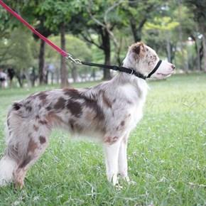 Coleira cabresto Obedience anti-puxão para cães