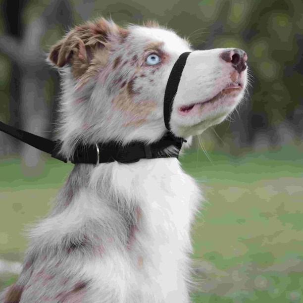 Coleira cabresto Obedience antipuxão para cães