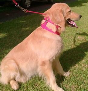Coleira com enforcador anti-puxão Maxi Control para cães