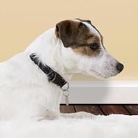Produto Coleira de Identificação Pet com nome gravado