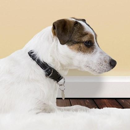 Coleira de Identificação Pet com nome gravado