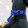 Coleira enforcador Belga com regulador para cães