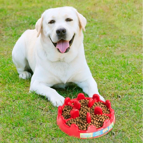 Comedouro lento Pet Fit para cães que comem muito rápido