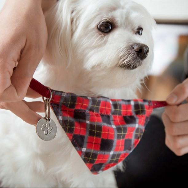 Conjunto Coleira + Bandana Pet Style para cães e gatos