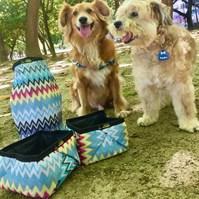Produto Conjunto comedouro e bebedouro Active Premium impermeável para cães