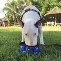 Conjunto comedouro e bebedouro Active Premium impermeável para cães