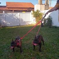 Produto Guia Cani Double para passeio com dois cães