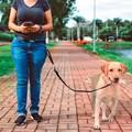 Guia de cintura Hands Free para passear com cães sem usar as mãos