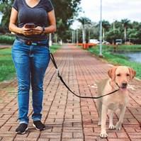 Produto Guia de cintura Hands Free para passear com cães sem usar as mãos