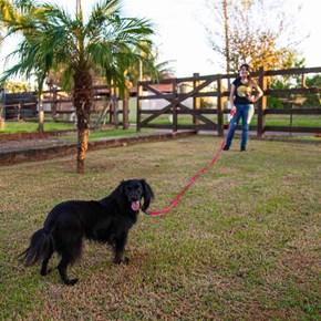 Guia longa de treino Slin leve para treino 15mm mosquetão latão