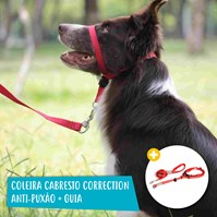 Produto Kit passeio pet Coleira Correction anti puxão + Guia Classic