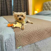 Produto Manta para cama Elegance impermeável para acomodar cães (Peseira)