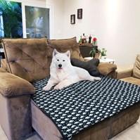 Produto Manta Protection Pet impermeável para acomodar cães na cama
