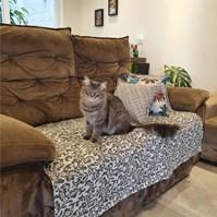 Produto Manta Protection Pet impermeável para cães na cama ou sofá
