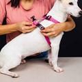 Peitoral anti puxão Smart para passeio e adestramento de cães
