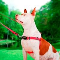 Produto Peitoral anti puxão Smart para passeio e adestramento de cães