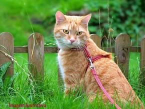 Peitoral Cat Walk com guia para passear ou levar gatos no carro