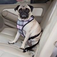 Produto Peitoral Confort Travel com guia dupla função - passeio ou carro