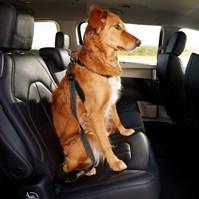 Produto Peitoral Safe Travel para cães para uso no carro ou passeio