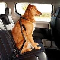 Produto Peitoral Safe Travel Premium para levar cães no carro ou passeio