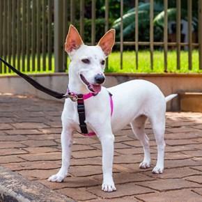 Peitoral Smart antipuxão 3 em 1 para cães: passeio ou carro