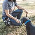 Porta Petiscos de cintura Pet Style com zíper para treino de cães
