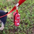 Porta saquinhos Pet Limp (cata caca)